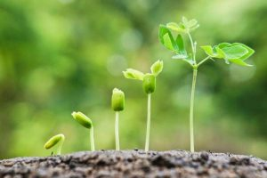 ERP solution compatible growth plan