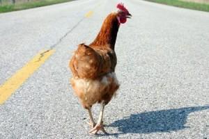 Tegal chicken