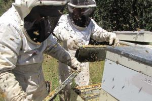 Digitisation for beekeepers