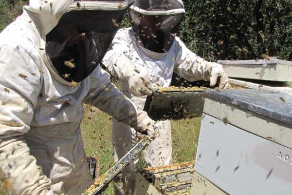 Digitisation for beekeepers
