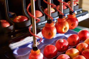 Automated apple packing_Robotics Plus