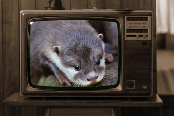 Zoom makes a splash with Otter transcription