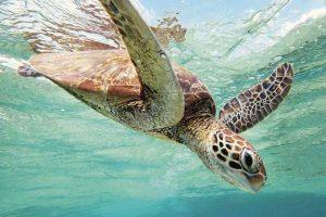 Street lights powers turtle survival