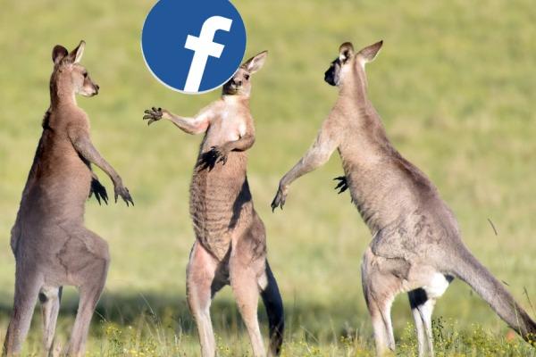 Kangaroo court_Facebook