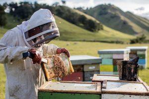 Comvita honey business